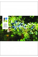 Photo wallpaper with juniper berries, 300x200cm